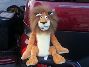tour-lion
